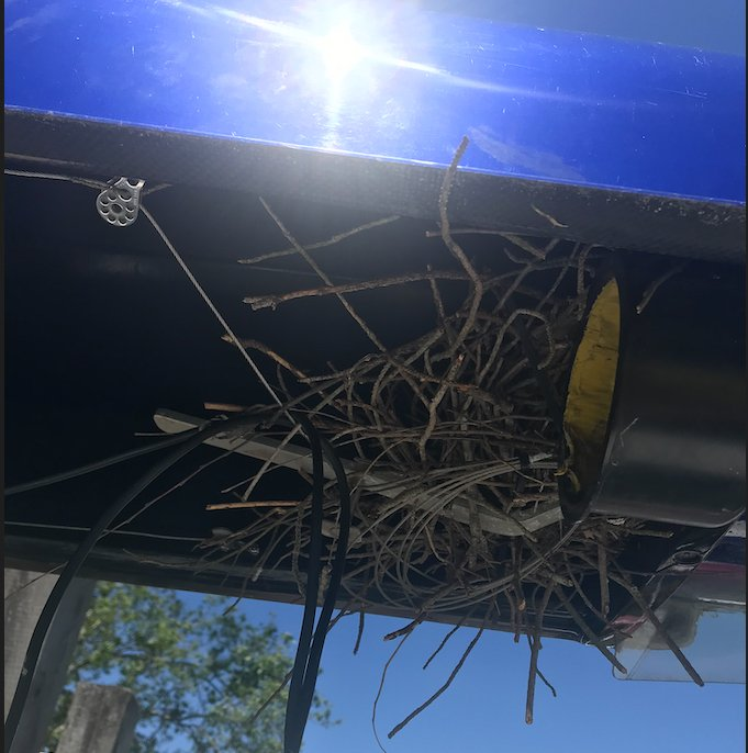 This is a photograph of a bird's nest in a rowing shell